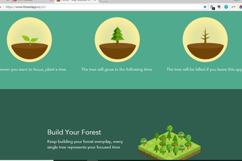 Wyhoduj las na swojej produktywności, wirtualna asystentka